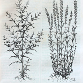 Savonnerie-de-la-licorne-cours-julien-marseille-veritable-savon-de-marseille-185